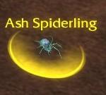 Ash Spiderling