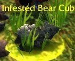 Infested Bear