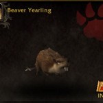 Beaver Yearling